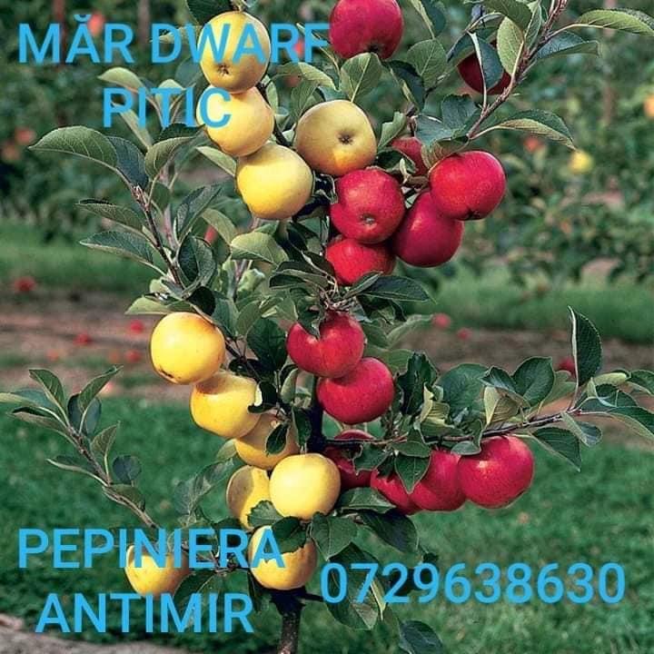 pomi fructiferi pitici