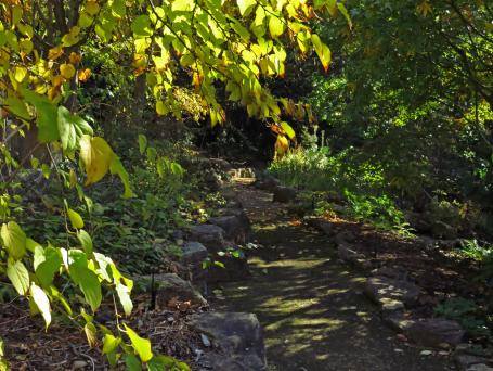 botanic gardens Tasmania 188_4000x3000