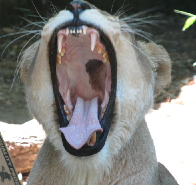 Taronga Zoo 163_3011x2843