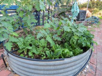 garden update 019_4000x3000