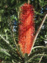 Canberra botanic gardens pc 073_3000x4000