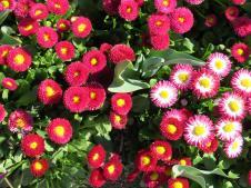 Floraide day2 jc 207_4000x3000