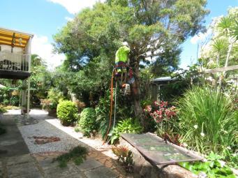 Big Jim tree cutting 031_4000x3000