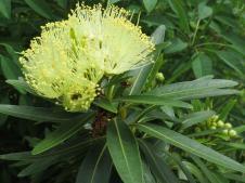Forgotten this plants name!!!
