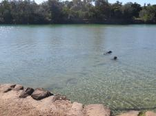 These 2 are enjoying a swim