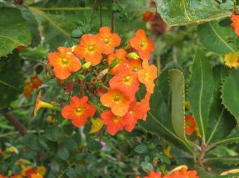 spring garden-4_4000x3000