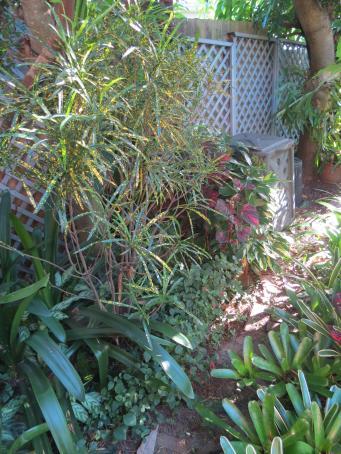 garden in february 2016 pc 091_3000x4000
