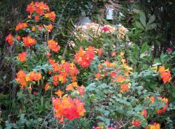 july garden-12_3771x2797