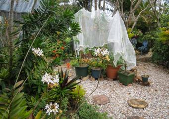 july garden-4_3611x2560
