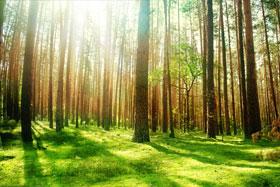 Ekološke teme i dileme