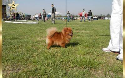Dog show 21.04.2013 CAC Backo Petrovo selo