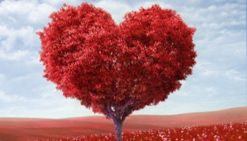 Beata: oczyszczone serce
