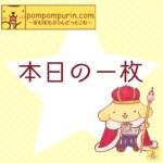 ポムポムプリン☆本日の一枚1/3