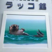 ラッコ☆日本国内の10頭のラッコ!