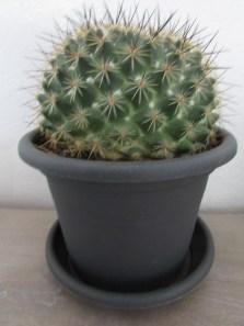 Mon Cactus Boule