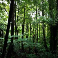 Forest Bathing in Puketoki Forest Reserve New Zealand