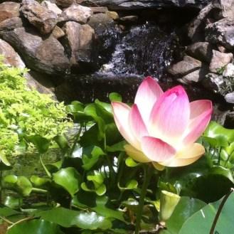 lotus falls