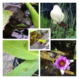 Pond Plants attract wildlife to the garden