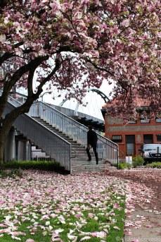 Spring outside Portland Union Station. © Violet Acevedo