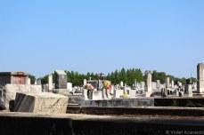 St. Patrick Cemetery No 1. © Violet Acevedo