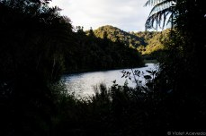 The lake peaking out between the bush. © Violet Acevedo