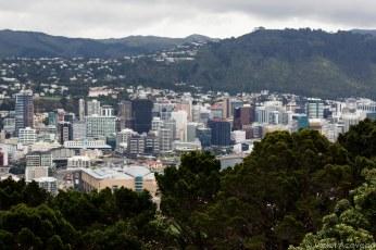 Downtown Wellington stretches beneath us. © Violet Acevedo