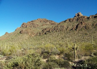 Saguaro National Park, Sonoran Desert, Tucson, Arizona
