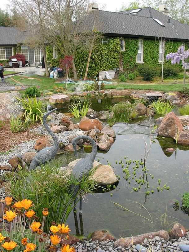 Large Koi Pond Design