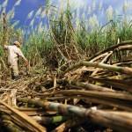 Decreto No 527.- Se regula el exceso de inventarios de alcohol carburante para prevenir el colapso de la producción de azúcar en el marco de la emergencia económica, social y ecológica.