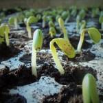 農業競争力強化支援法によって、日本の種苗が海外に流出する