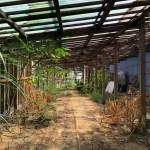 樹蕊香菇寮