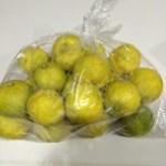 手作りポン酢のレシピ公開!柚子(ゆず)の収穫とゆずしぼり!