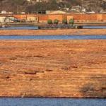 材木が海水上に浸されていますが、木は腐らないのでしょうか?