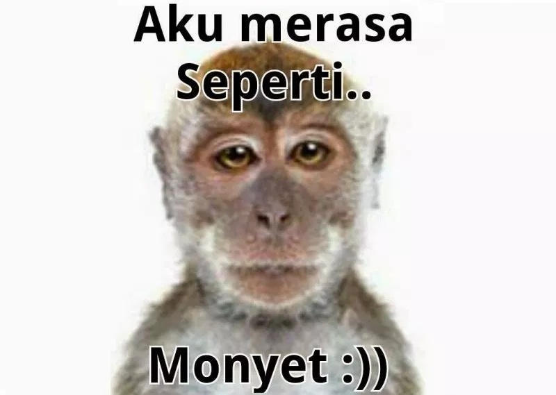gambar lucu monyet