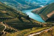 As uvas usadas para se produzir o vinho do Porto são plantadas na região do Douro, no interior. A região, hoje também famosa pelos tintos, é belíssima e super bem equipada para o turismo
