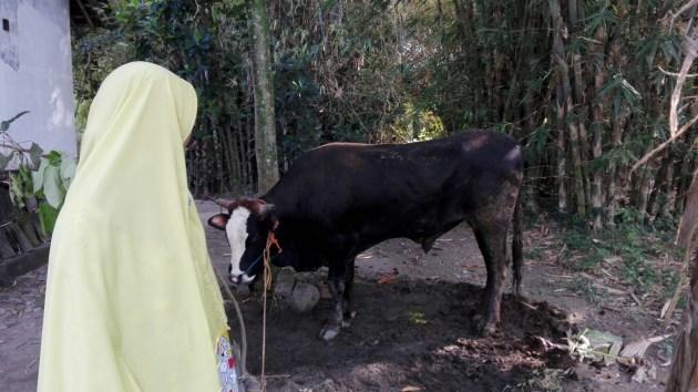 tahan berapa lama daging sapi kambing dalam freezer