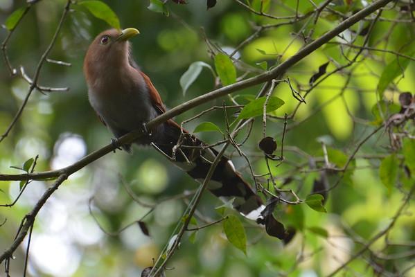 Metropolitan Park, Panama