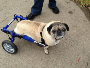 wheelchair dog wood folding chair