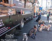 San Francisco Dog Connect