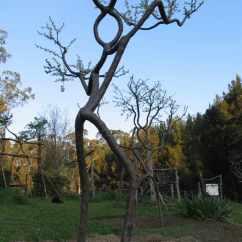 Walking Stick Chair Big Joe Bean Bag Lots Pooktre Living Growing People Trees