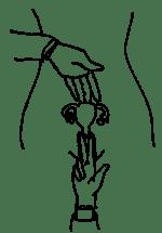 How to Examine a Woman's Genitals (the Pelvic Exam
