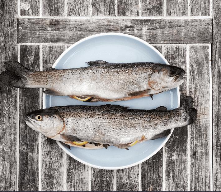 pescados poowercool