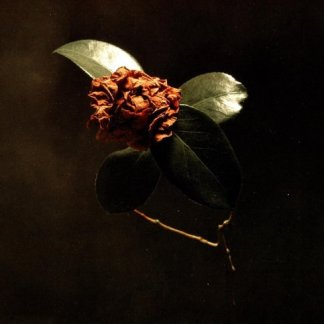 St Paul and the Broken Bones Young Sick Camellia CD