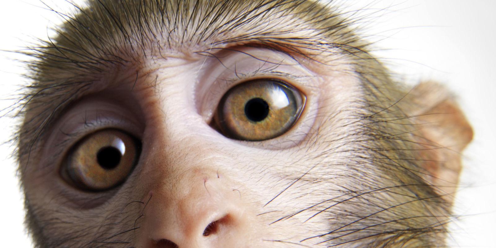 LabGrown Cells Restore Sight to Blind Monkeys