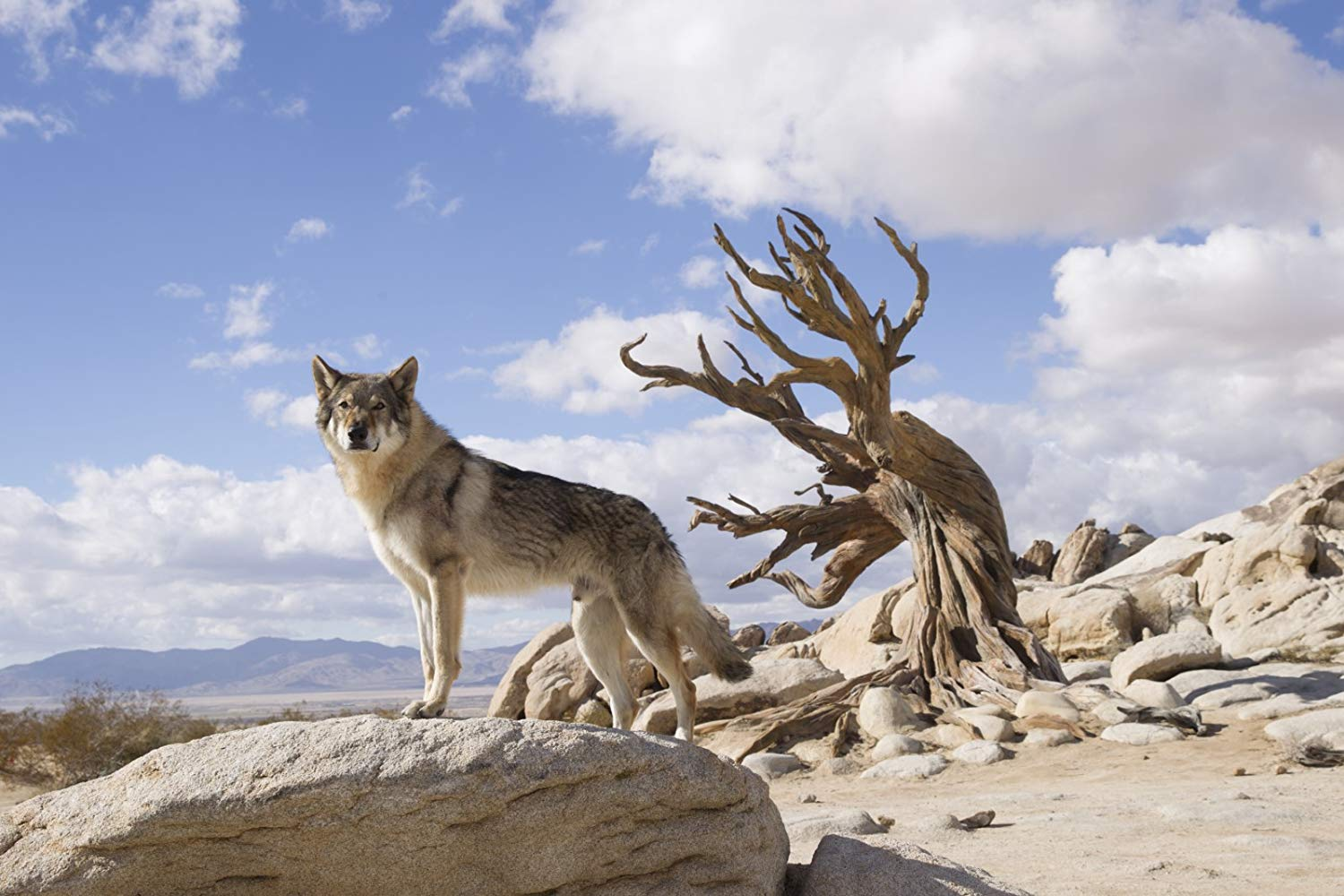 Cute Adventure Is Out There Wallpapers Wolf Dogs Lend Genuine Emotional Weight To Epic Adventure
