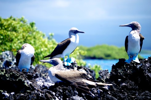 Galapagos Islands. © Karen Edwards