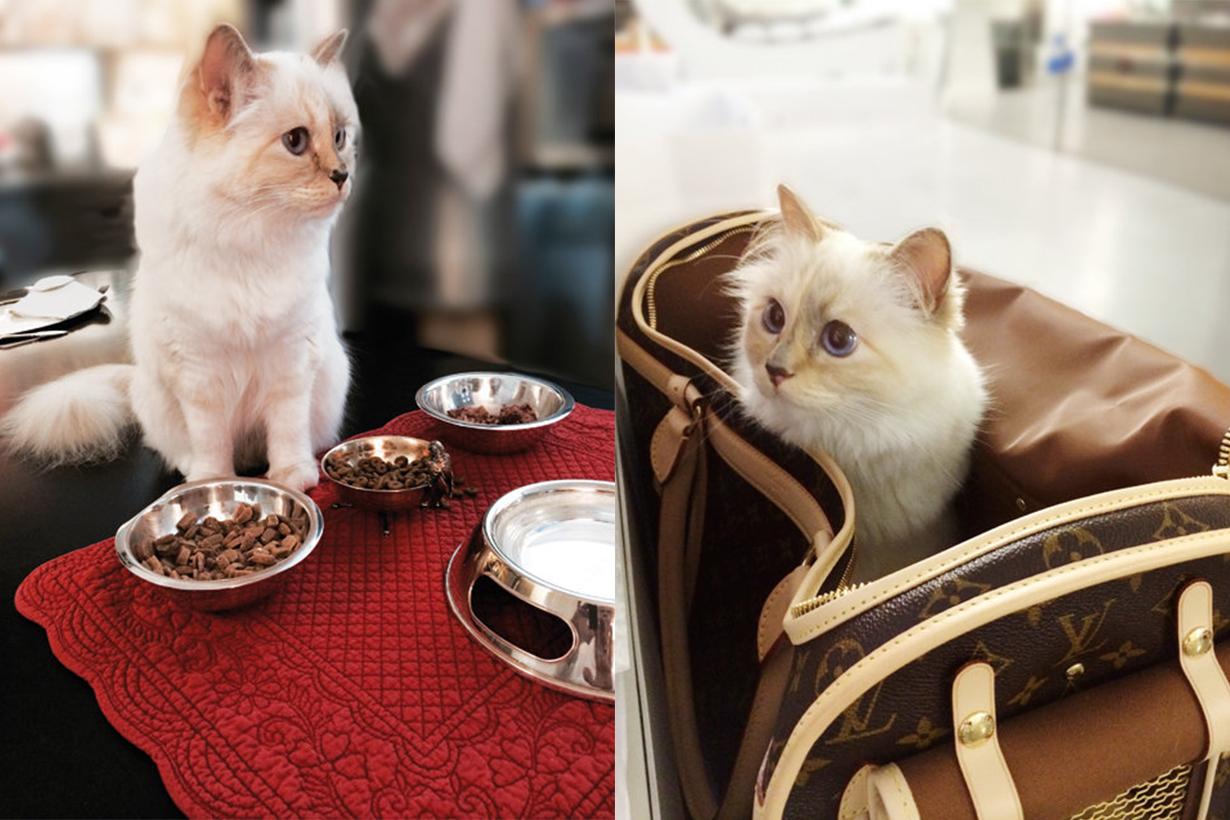 Karl Lagerfeld 的愛貓 Choupette 將繼承巨額遺產。為何她是老佛爺的畢生摯愛?