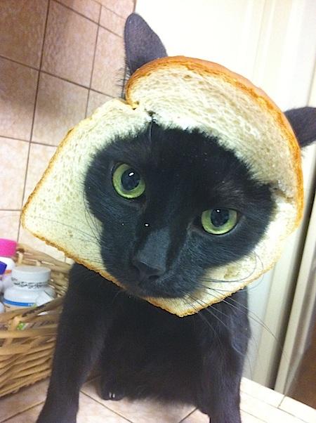 breadedcats12.jpg