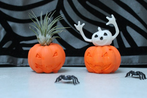 Halloween pumpkin air plant holders