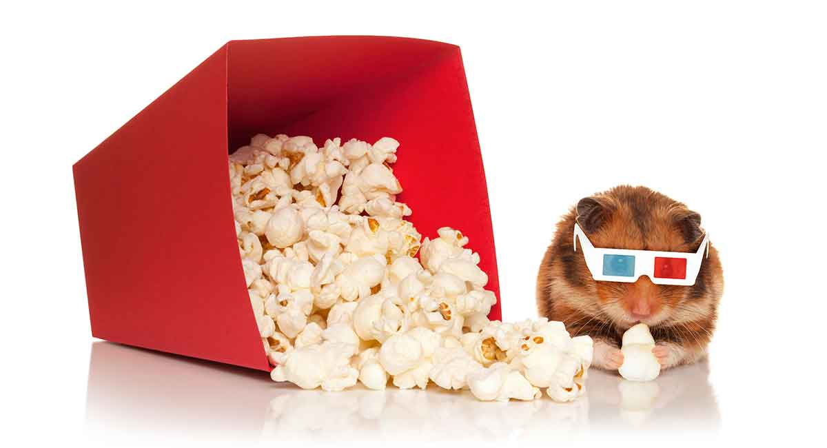 can hamster eat popcorn